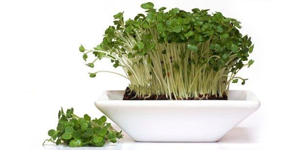 Salade van waterkers, appel en witloof