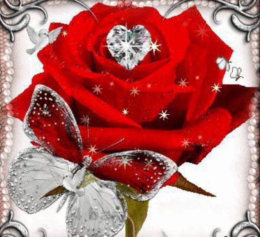 Diamond flower plant