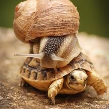 ~hitching a ride..