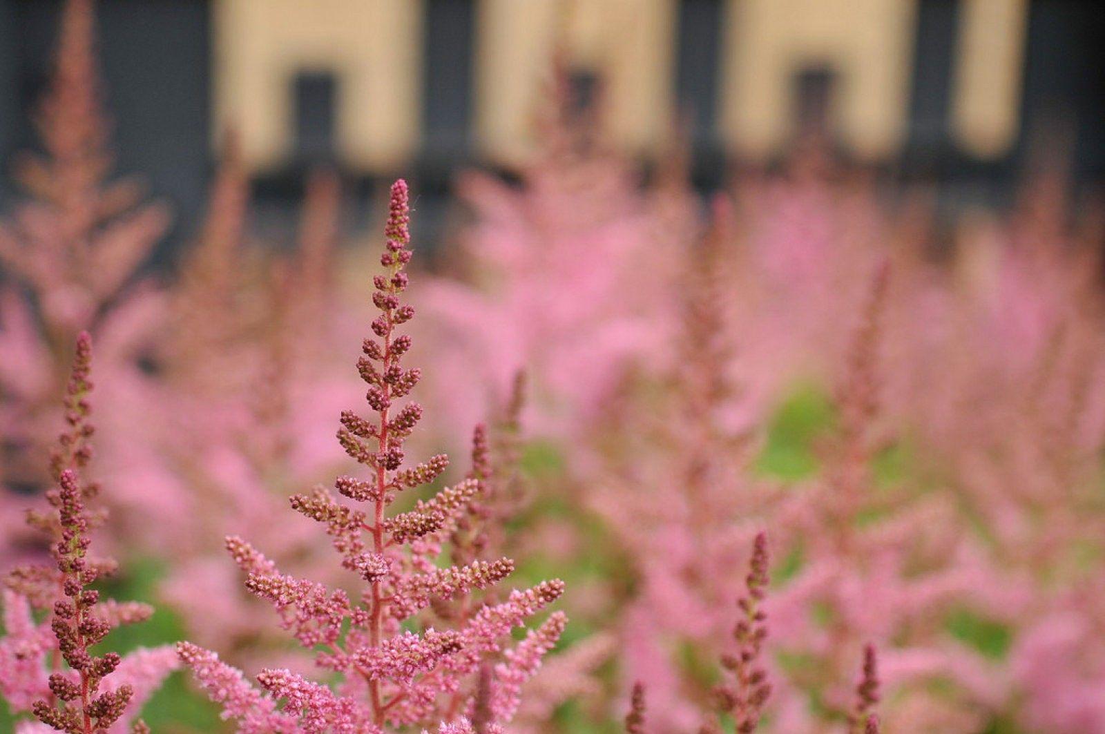 Enamorado de esta preciosa planta, ¿quieres conocerla