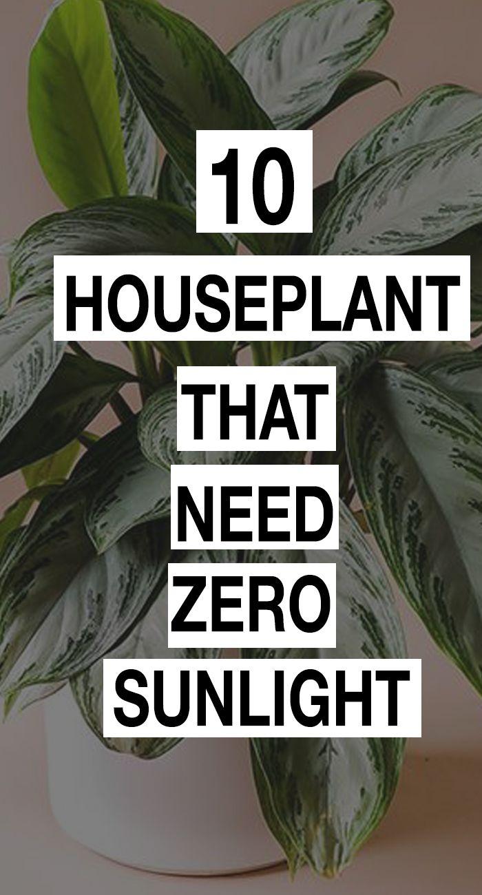 9 plants Room sunlight ideas