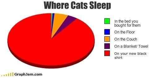 10 Funny Pie Charts About Your Cat | Cat sleeping, Funny pie charts, Funny
