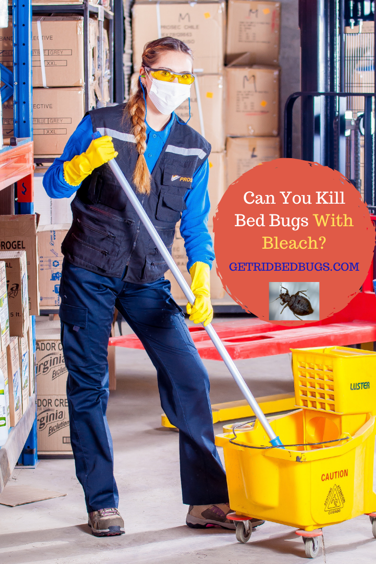 Does Bleach Kill Bed Bugs? Learn the facts here Cleaning
