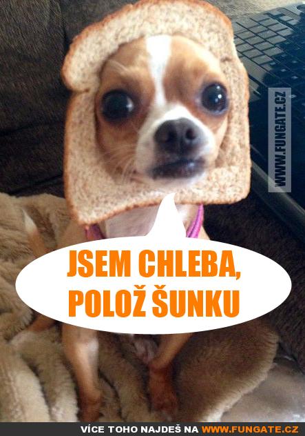 Jsem chleba, polož šunku | Humor, Funny jokes, Some jokes