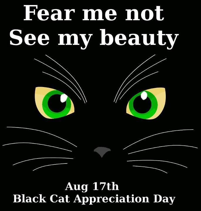 Items In North Bayshore Antiques Store On Ebay Black Cat Appreciation Day Black Cat Buy A Cat