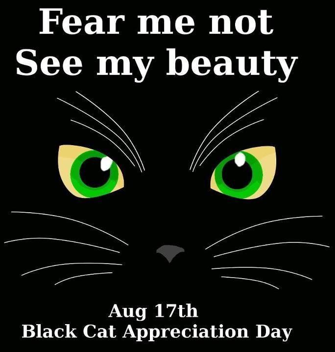 Black Cat Appreciation Day August 17th #blackcatsrule