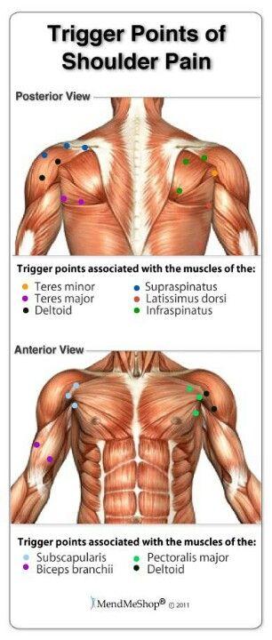 Shoulder Pain Diagram Real Bodywork Diy Enthusiasts Wiring Diagrams