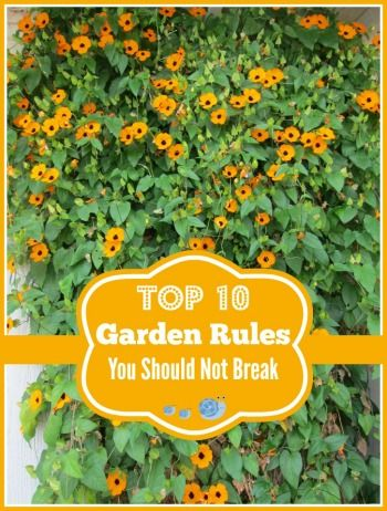 Top 10 Gardening Rules That You Should Never Break Plants