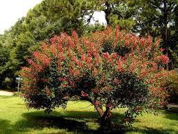 alberi bellissimi da giardino