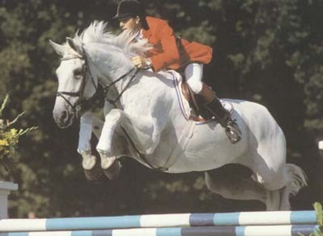Milton - Another once in a lifetime horse, this is who Milty was named after