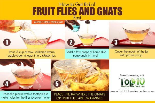 How To Get Rid Of Fruit Flies And Gnats Fast Top 10 Home Remedies Fruit Flies How To Get Rid Of Gnats Apple Cider Vinager
