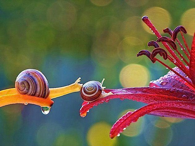 Faszinierender Einblick In Die Welt Der Schnecken Fotos Von Vyacheslav Mishchenko Schnecken Tiere Und Tierfotografie
