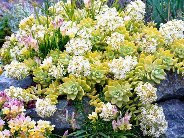 Sukkulenten für draußen u2013 winterhart und exotisch Gartengestaltung u2013 Garten und Landschaftsbau  ~ 26081049_Sukkulenten Winterhart Steingarten