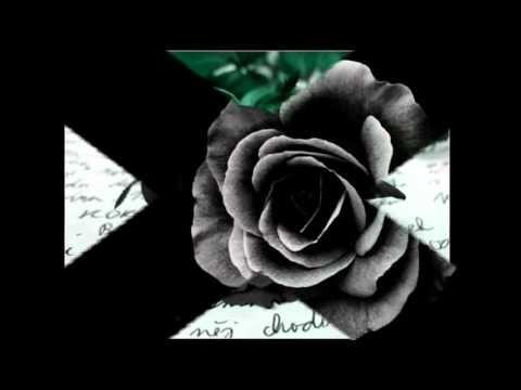Wyznania Najcichsze Waldemar Kocon Pozegnanie With Images Rose Flowers Plants
