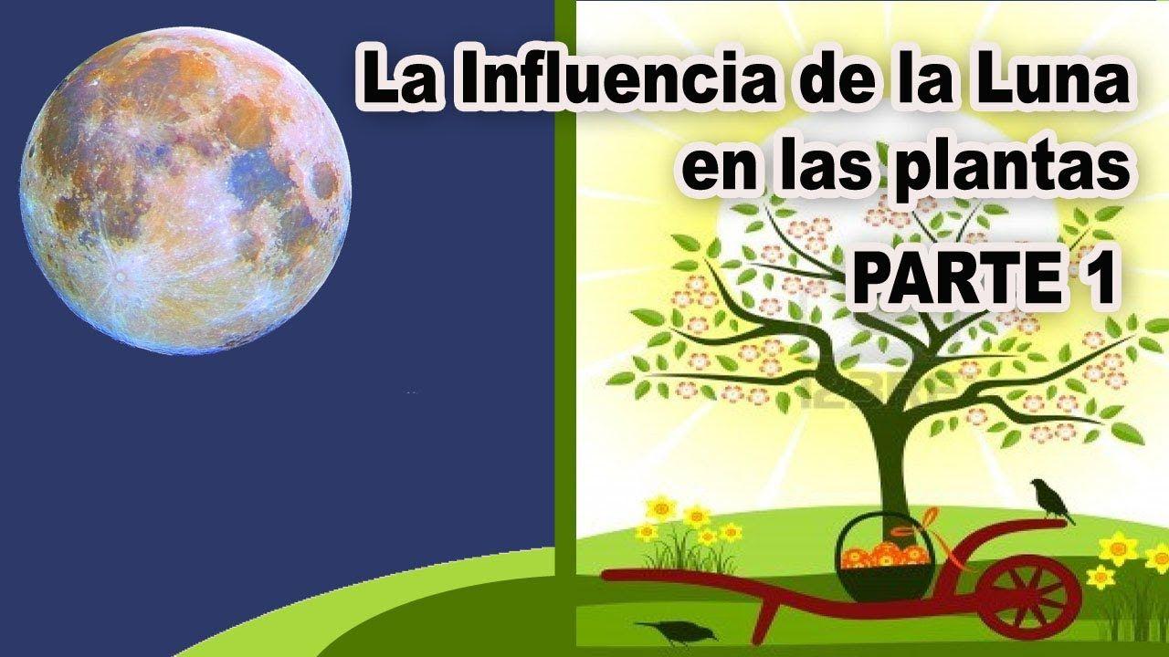 La Influencia De La Luna En Las Plantas Fases Lunares