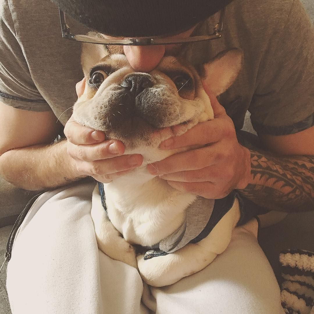 Whoaaawhat A Kisssss Frenchielovers Frenchiecorner Frenchiesociety Dogofinstagram Whoaaawhat A Kisssss Frenchielovers Frenchiecorner F Dogs French Bulldog Boston Terrier