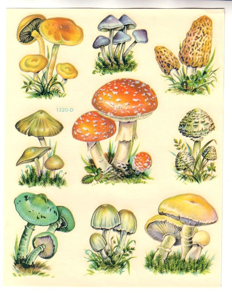 Mushrooms Stuffed Mushrooms Mushroom Art Mushroom Drawing