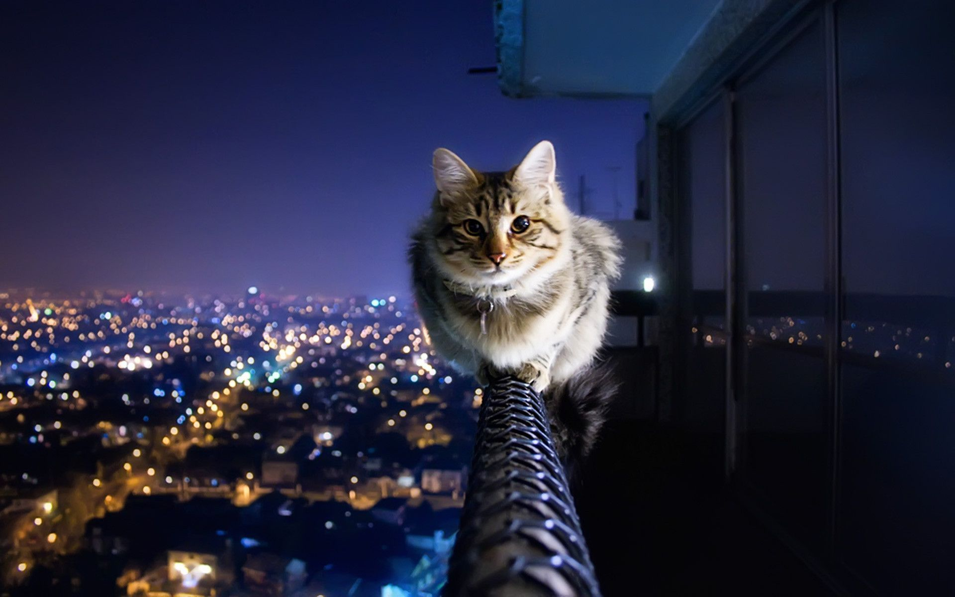 Cats Wallpapers  Android Apps on Google Play 1920×1200 Cats Images Wallpapers (45 Wallpapers) | Adorable Wallpapers