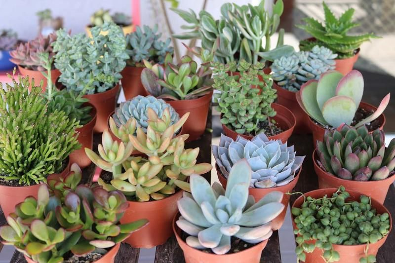 4 Assorted Succulents Succulents Plants Unusual Plants