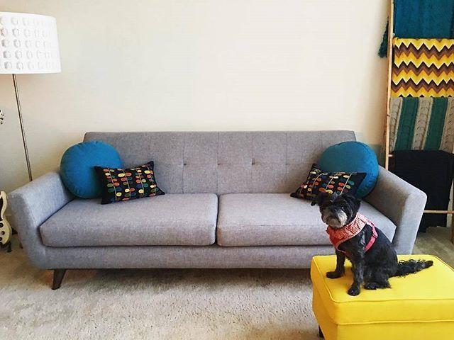 It's a sofa showoff! [Hughes Sofa   Taylor Felt Grey fabric] #dogs #dogsofinstagram #midcentury #modern #midcenturymodern #midcenturymodernfurniture #midcenturydesign #fabric #furniture #retro #JBpets #JBcustomers #joybird