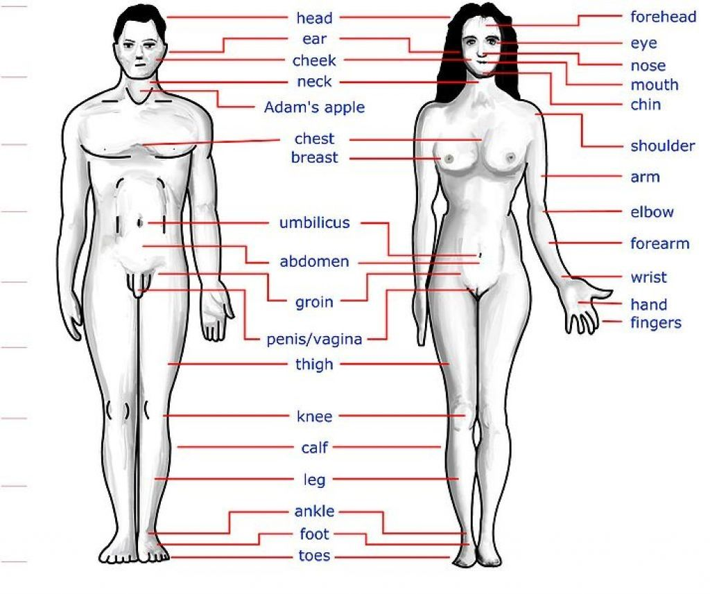 Body Diagram Girl Hygiene Wiring Diagram