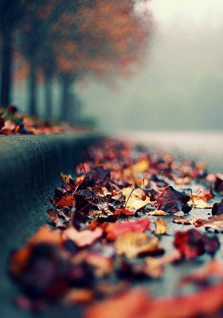 Beautiful fallen autumn leaves | Photo: what_marty_sees via Flickr