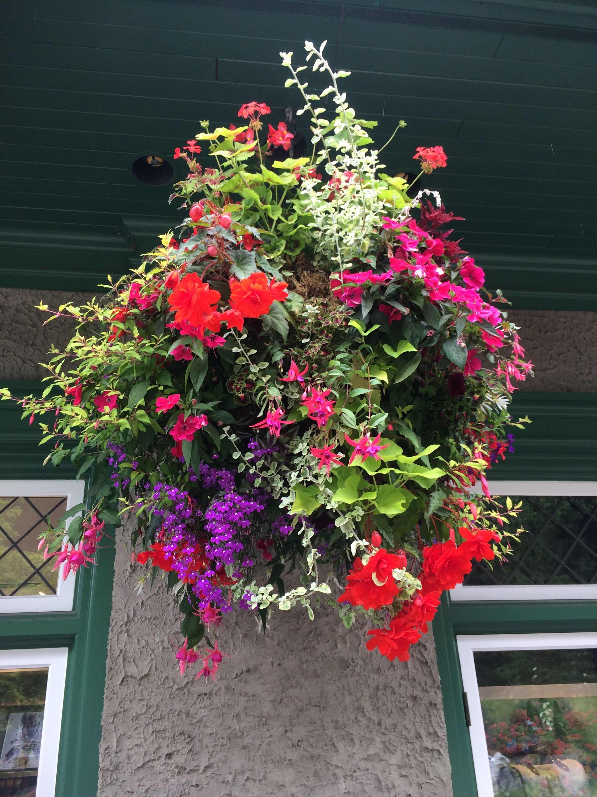 Fuchsia Lantana And Ipomoea In A Hanging Basket Partial Sun To Shade Vancouver Bc Hanging Baskets Garden Inspiration Hanging Plants