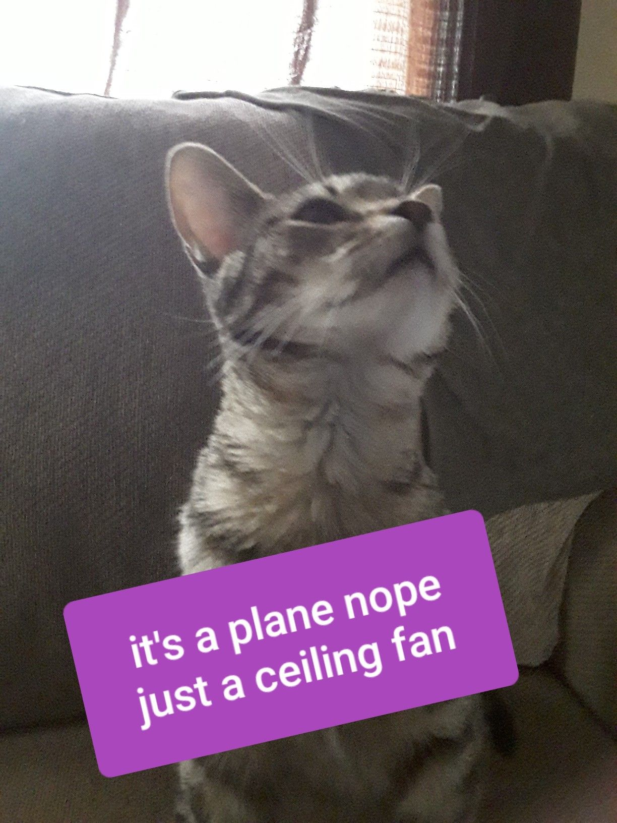 Pin By Autumn On Hi Animals Ceiling Fan Cats