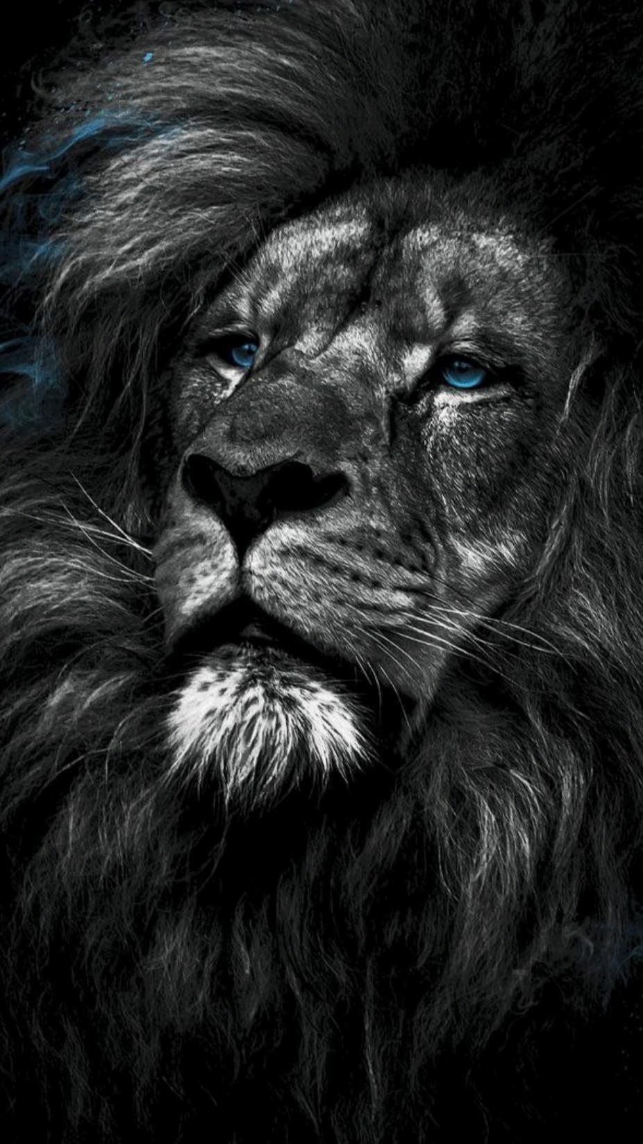 Love An Immersive Guide By ɩơ۷ɛ ɧųཞɬʂ Aesthetic black iphone lion wallpaper hd