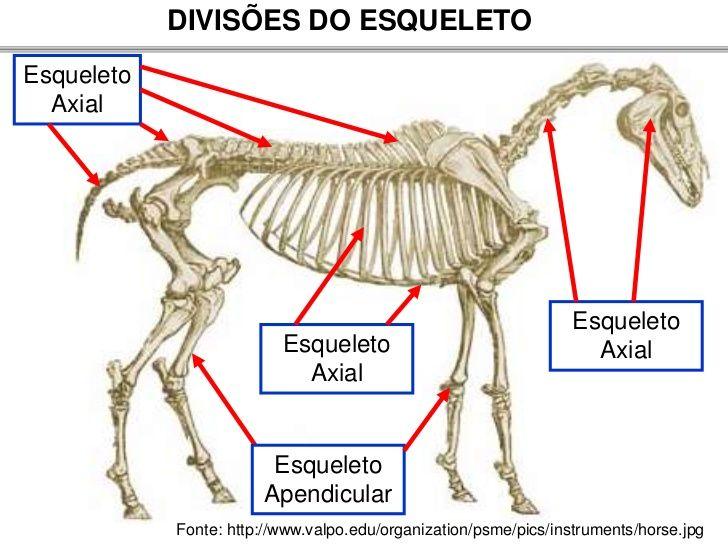 Resultado de imagem para anatomia cranio animais | Crânios e ossos ...