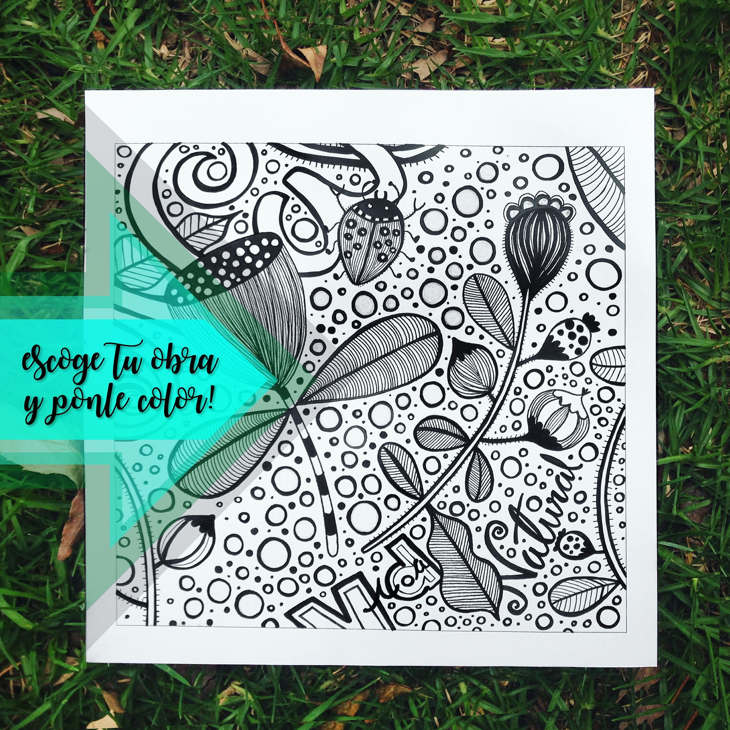 Ilustraciones para colorear. Dibujos para colorear para adultos y ...