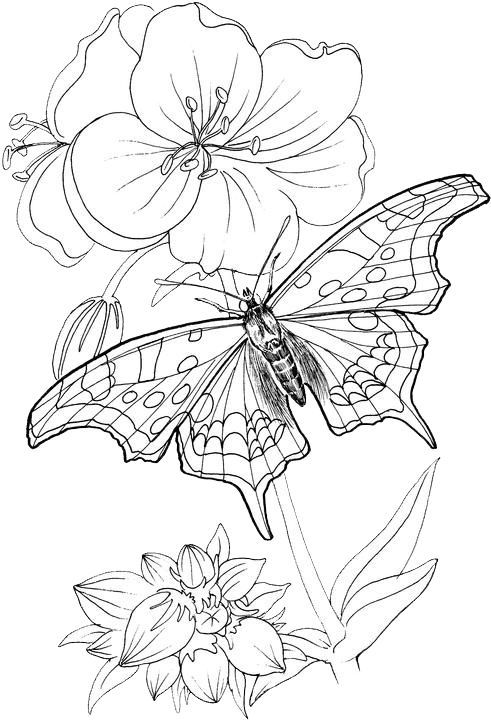 Pin By Rebecca Cape On Mandala Steampunk Butterflies Flowers And Other Things Butterfly Coloring Page Coloring Pictures Coloring Pages