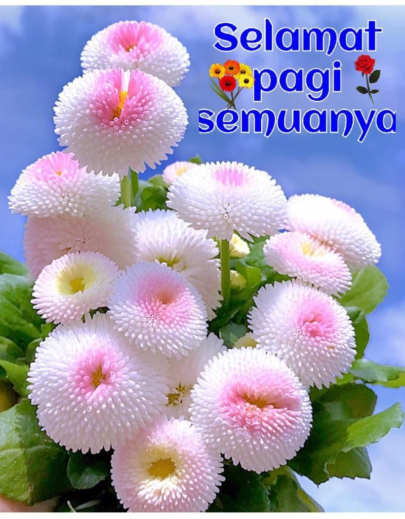 Pin oleh Paula Prasetya di Indonesian christian quotes