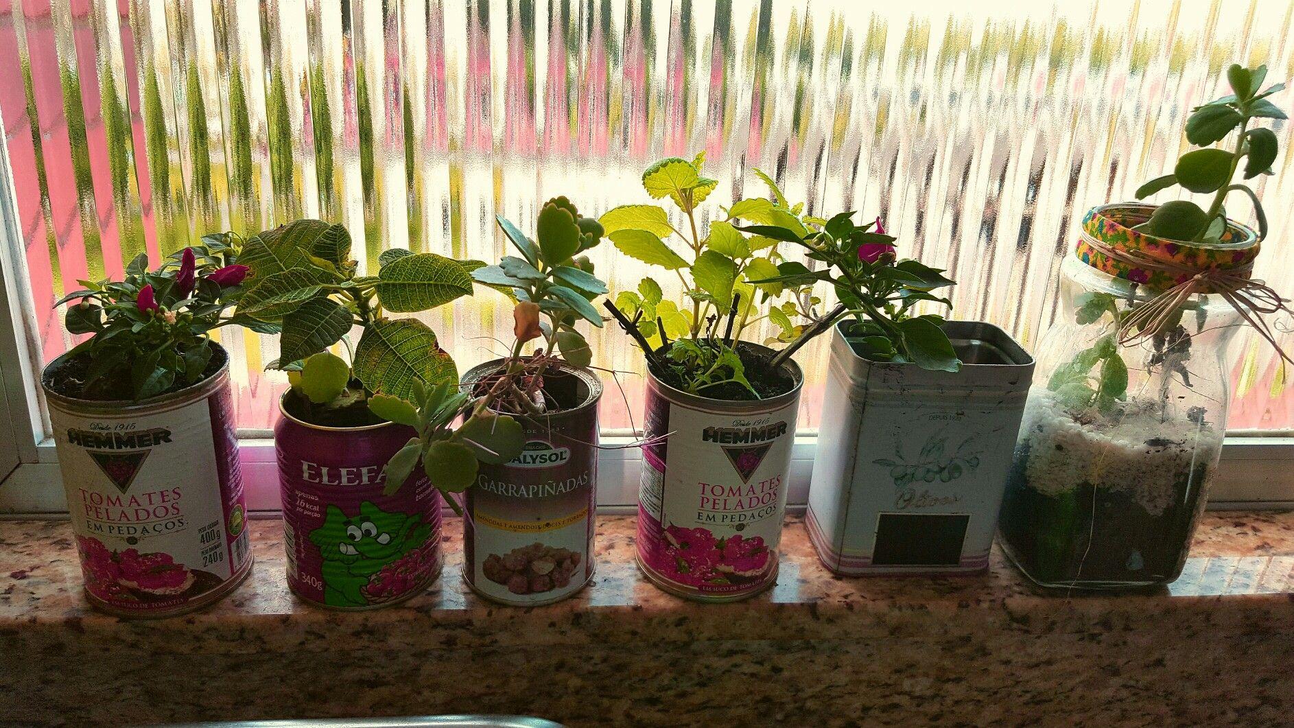 Recicle reutilize plantas enlatadas!