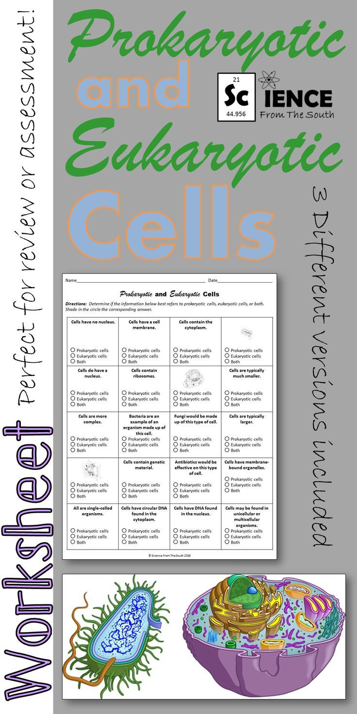 Prokaryotic And Eukaryotic Cells Worksheet For Review Or Assessment