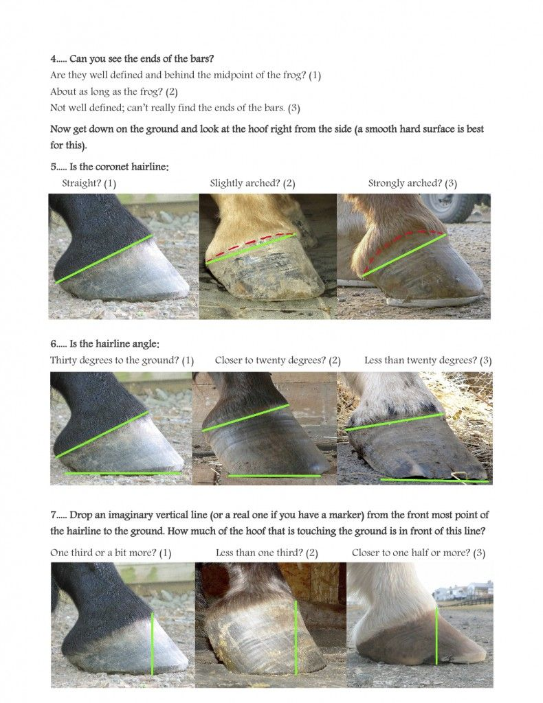 x ray visiont how to look inside a hoof great post to help you assess and learn more about proper foot shape and function  [ 790 x 1024 Pixel ]