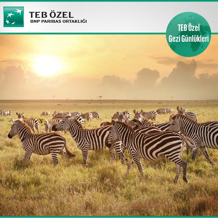 Kenya, Masai Mara'da safari için en uygun zaman Eylül sonu. Vahşi hayatı deneyimlemek için denemeniz gereken bir rota.
