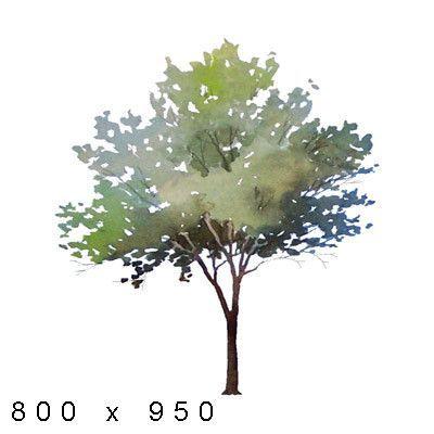 Texture Png Watercolor Elements Plants Watercolor Architecture Watercolor Trees Watercolor Plants