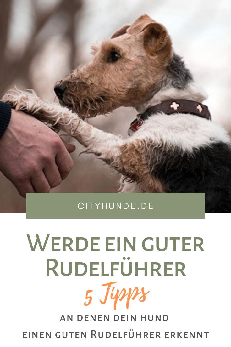 5 Tipps Fur Rudelfuhrer Hunde Hunde Welpen Erziehung Hunde Erziehen