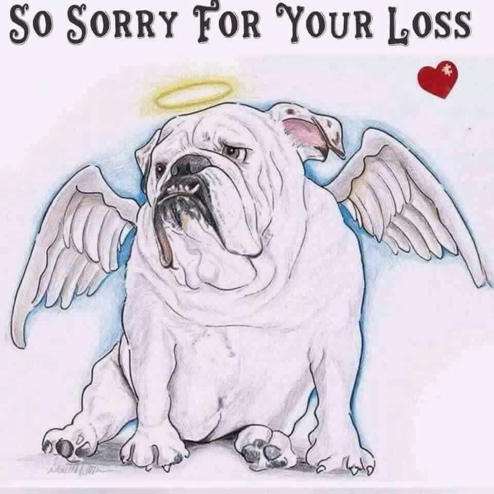 Pin On Pet Loss And Sympathy 1