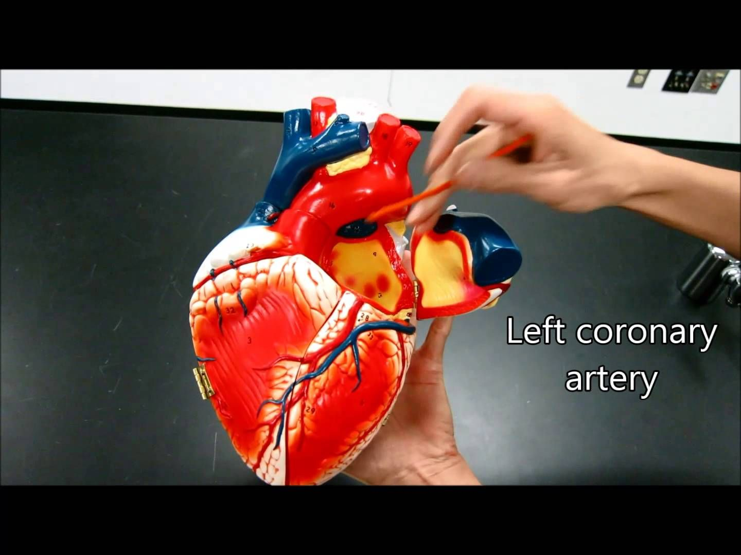 Heart Anatomy Physiology Nursing Valves Blood Flow Structure ...