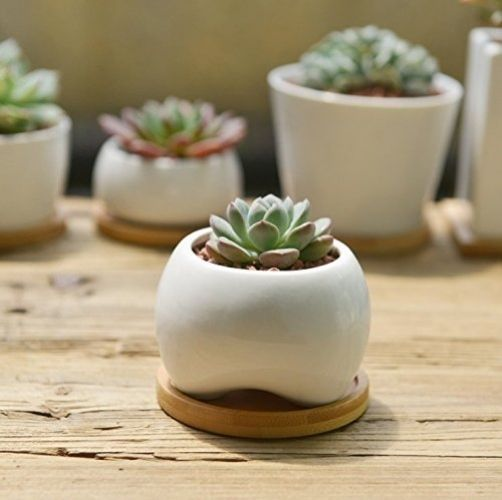 Sun E Modern White Ceramic Succulent Planter Pots Mini Flower Plant Containers With Bamboo Saucers Small Oval A Simple And Sleek Contemporary Pee
