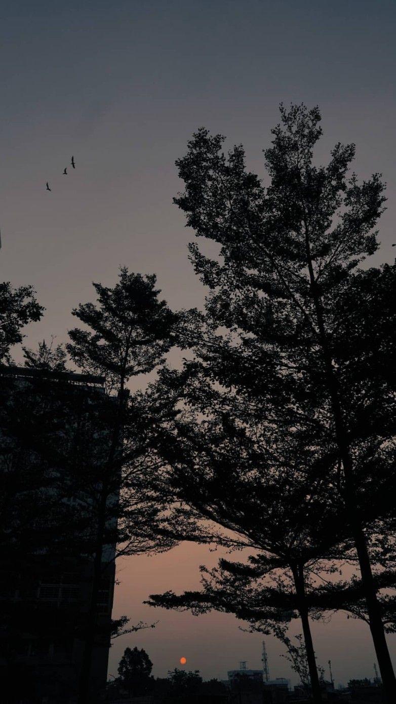 12 100 Fotografi Alam Pemandangan Latar Belakang
