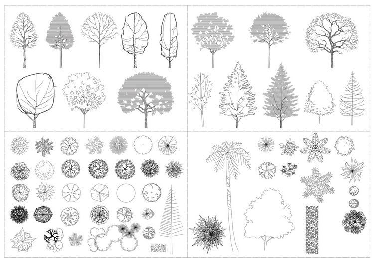 Autocad tree collection architectural resources Online architecture drawing