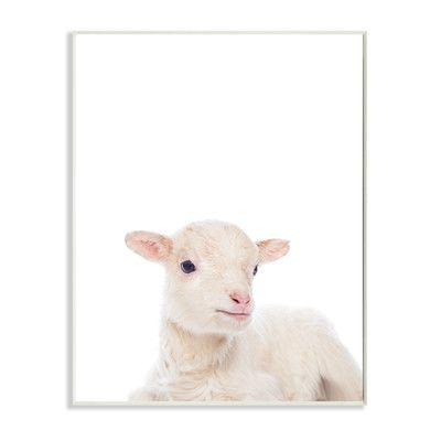 Stupell Industries Baby Lamb Studio Photo Wall Plaque