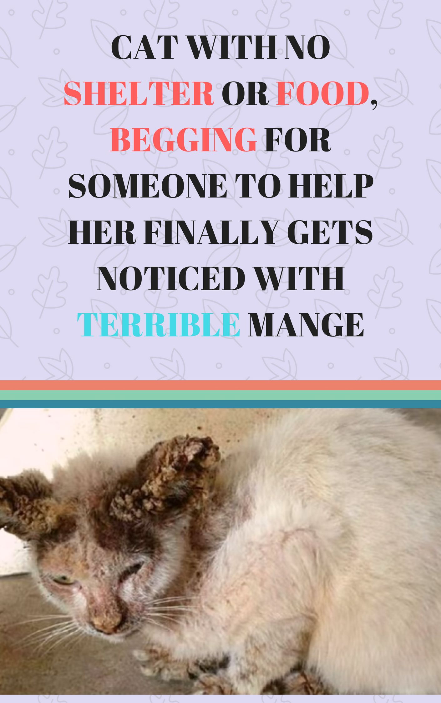 Cat With No Shelter Or Food Begging For Someone To Help Her Finally Gets Noticed With Terrible Mange Kitten Rescue Stories Cat Rescue Stories Kitten Rescue