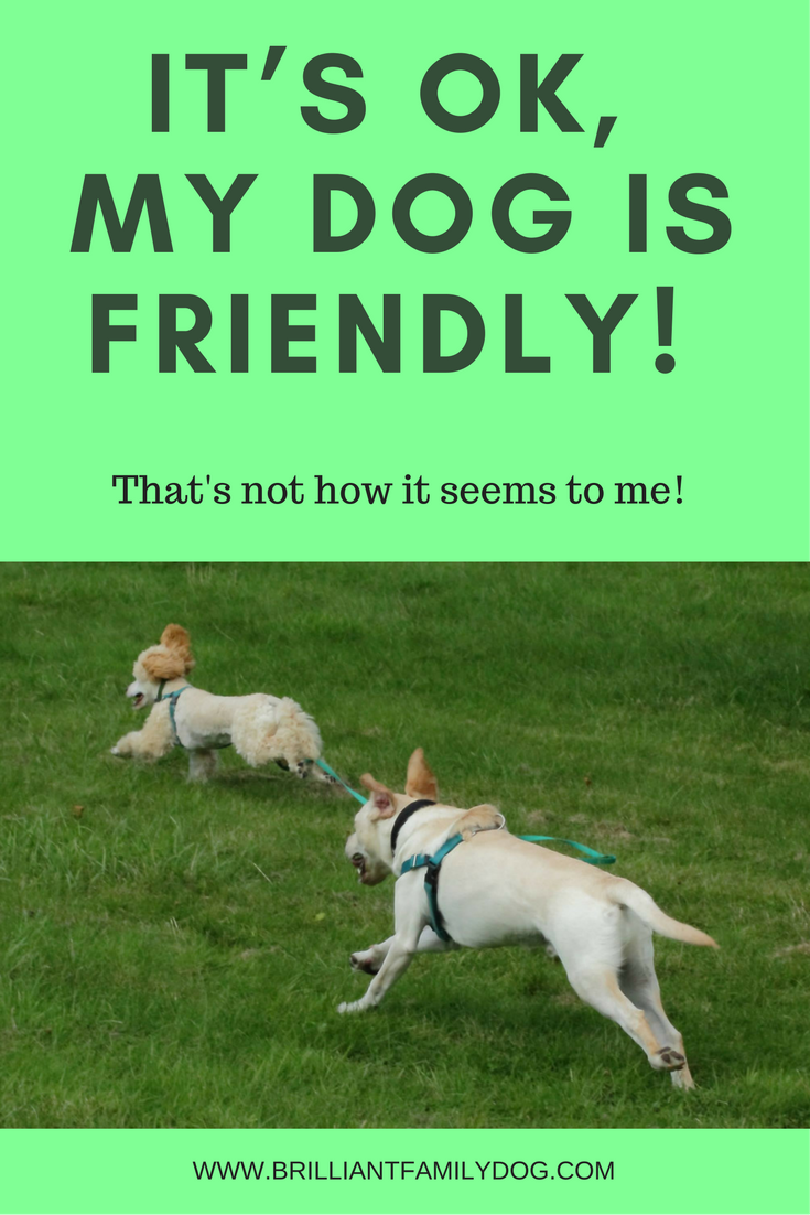 It S Ok My Dog Is Friendly That S Not How It Seems To Me Aggressive Dog Dog Behavior Problems Dogs