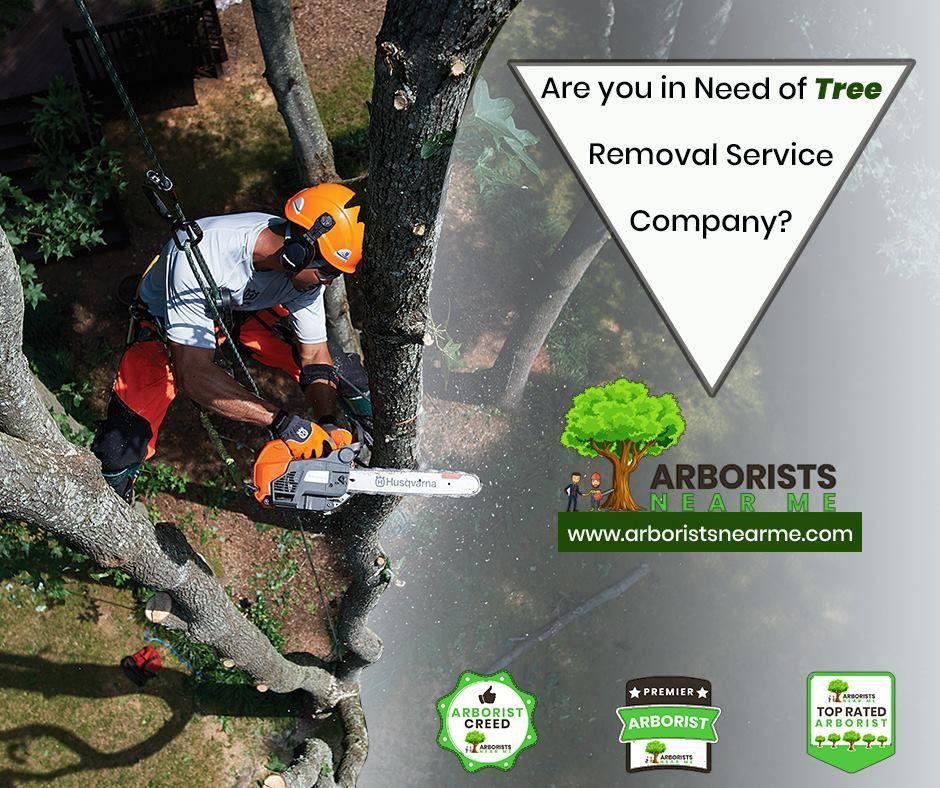 tree companies near me on Local Tree Removal Companies Near Me Tree Removal Tree Removal Service Tree Service