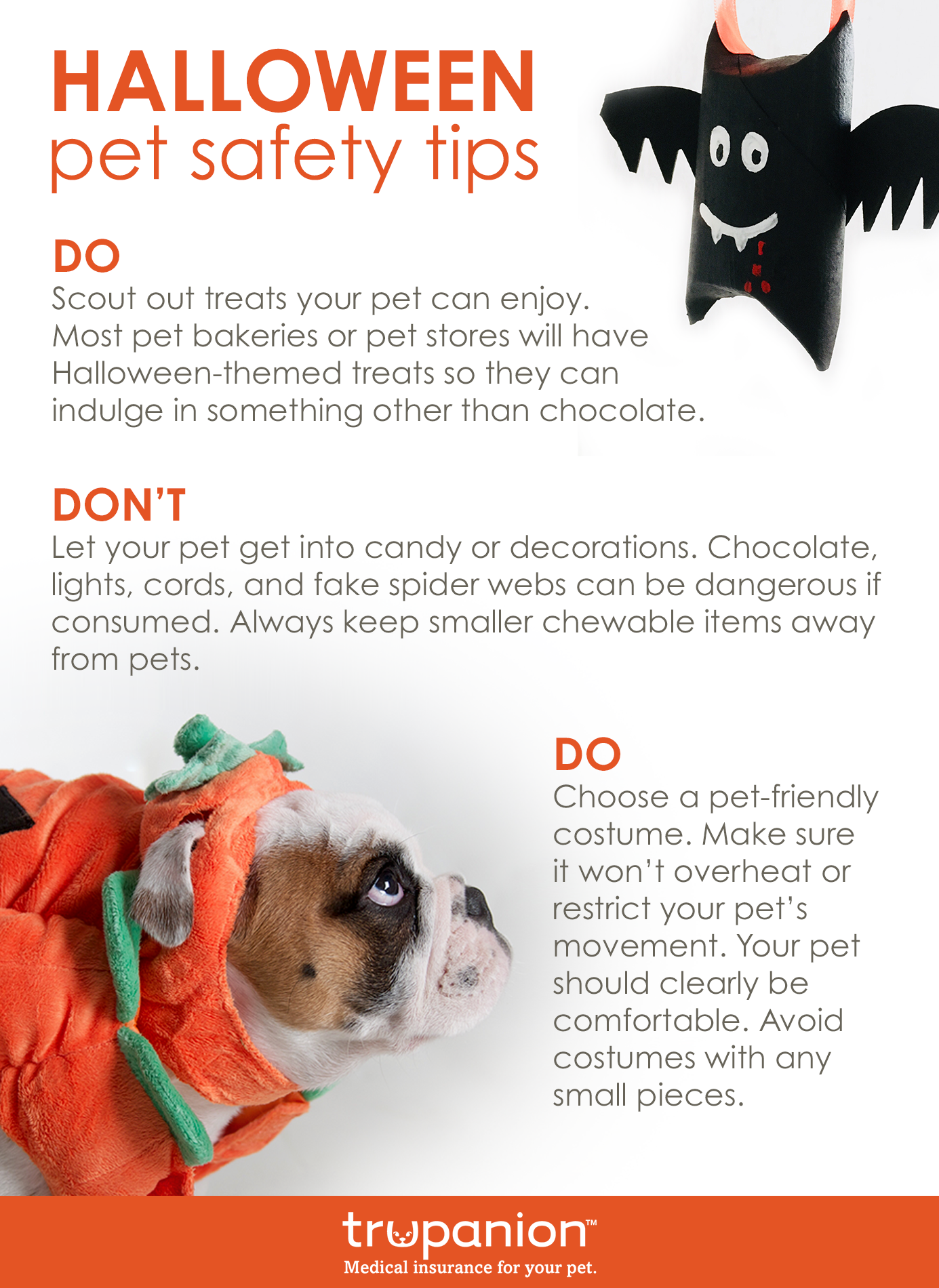 3 Vet Approved Halloween Pet Safety Tips With Images Pet Safety Halloween Animals Halloween Pet Safety