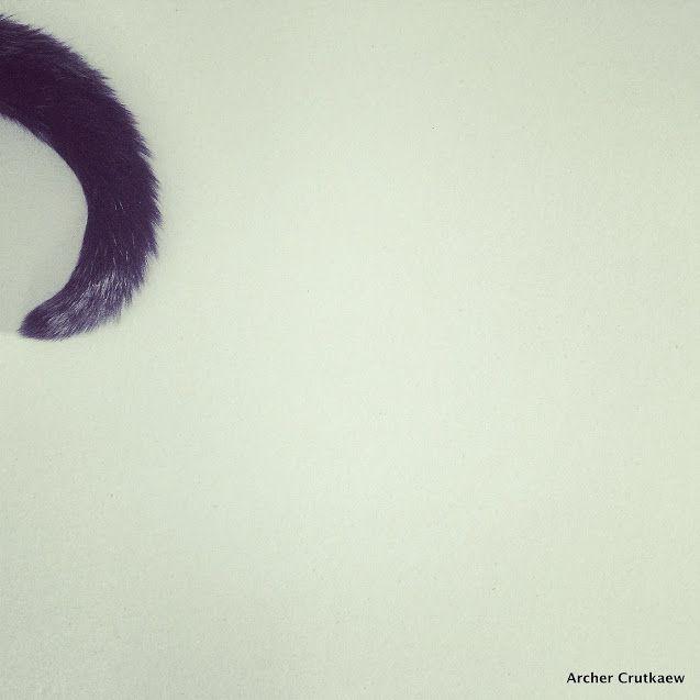 """"""" Silence, la queue du chat balance... """" / By Archer Crutkaew."""